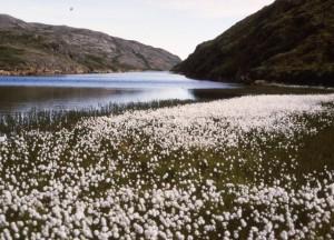 Blühende Wiesen und Flüsse im grünen Land